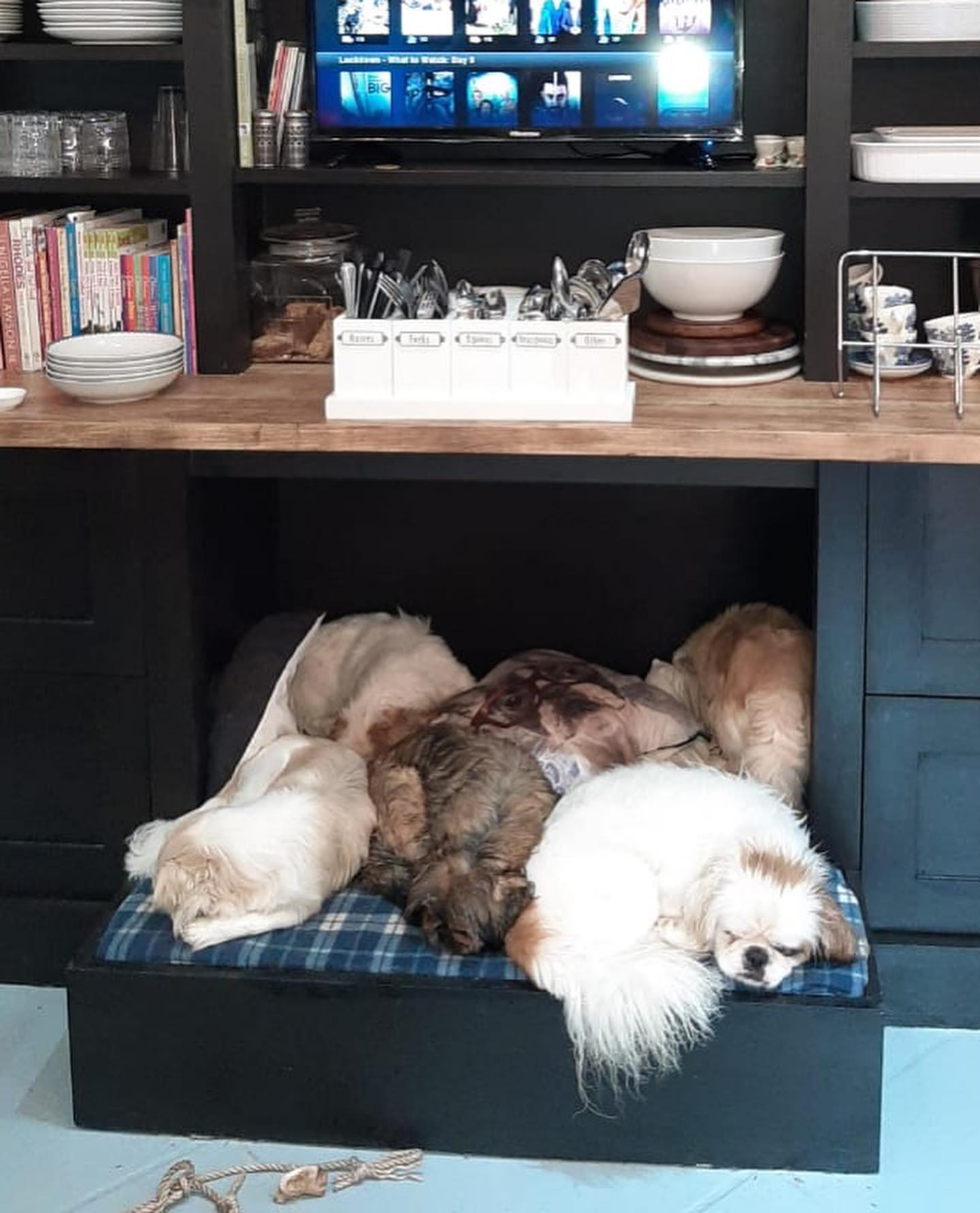 Dogs enjoying their bed